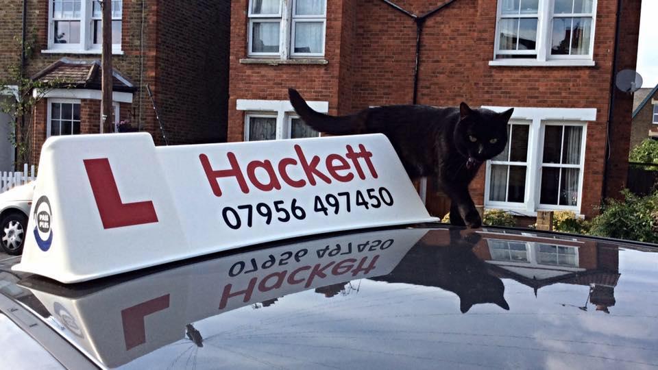 hackett cat